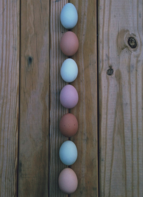 I might not have all my ducks in a row but my eggs are another story.